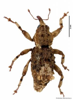 Ibero Diversidad Entomologica