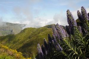 Biodiversity of the terrestrial arthropods of Madeira