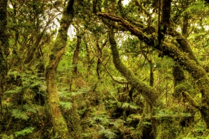BALA - Biodiversity of Arthropods  the Laurissilva of Azores